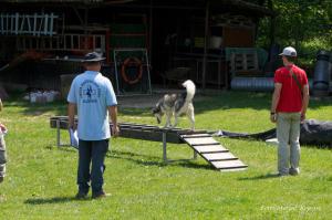 Sodnik spremlja delo vodnika in psa