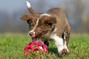 nejat_lox-puppy