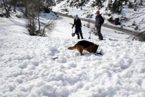 pes nakazuje vodnika